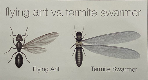 Termite-Swarmer-vs-Ants-scaled