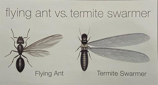 Termite-Swarmer-vs-Ants-scaled